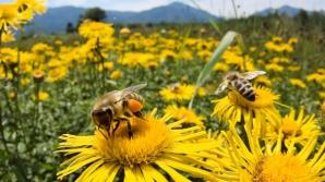 Viespile şi albinele fac victime în România: o femeie a murit, un bărbat - în stare gravă la spital