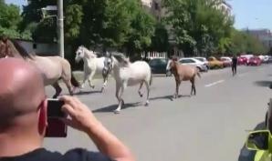 Cai pe stradă