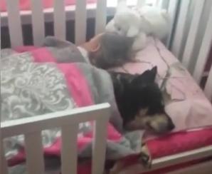 A mers să verifice copilul, dar a avut un şoc. Era lângă ea, în pat, şi nimeni nu bănuia nimic!