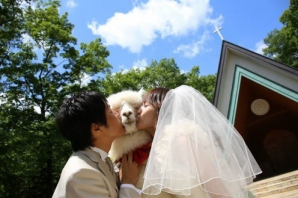 Trend în Japonia: martor la nuntă, o cămilă alpaca