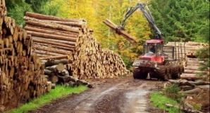Pădurea se află în 21 de județe din România