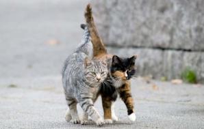Ţara în care pisicile nu mai au voie pe stradă