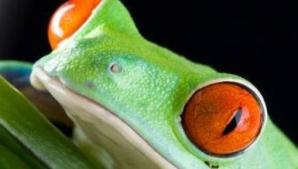 SUBIECTE BACALAUREAT 2015 BIOLOGIE