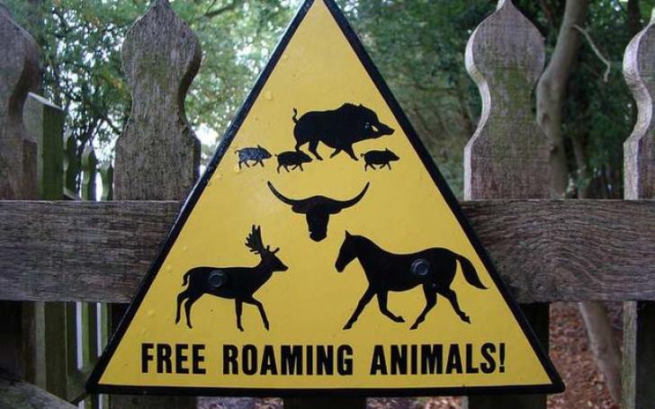 Animale libere pe străzile oraşului