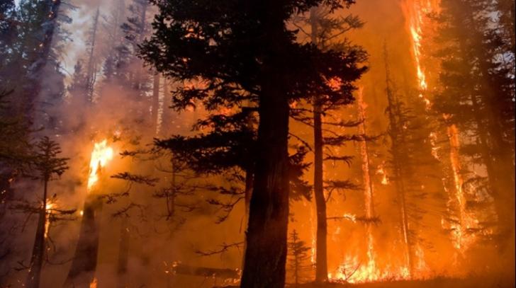 Devastatoare incendii de pădure în Croaţia, din cauza valului de căldură tropicală