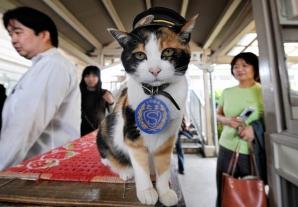Pisica șef de gară