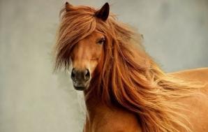 O nouă metodă de înfrumusețare face ravagii printre femei: şamponul pentru cai