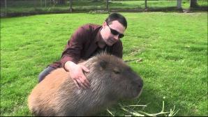 VIDEO AMUZANT. Îngrijitorii de la ZOO se chinuie să prindă un şoarece imens
