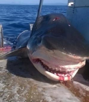 Terifiant! Un monstru marin a fost scos din adâncuri. Şi mort oamenii se îngrozesc când il văd! / Foto: Facebook.com