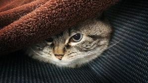 Cea mai malefică pisică din lume. Arată ca un vampir