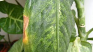 Un copil de 4 ani a muşcat accidental din această plantă. Ce a păţit e îngrozitor!