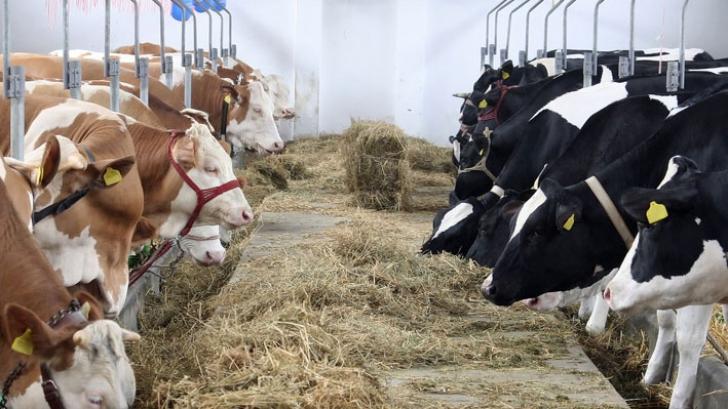 """Crescătorii de animale, în pragul falimentului din cauza secetei. """"Vom trece la proteste"""""""