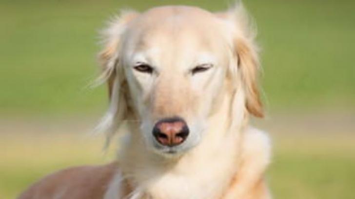 Acest câine a auzit o ambulanţă. Ce a urmat întrece orice imaginaţie!