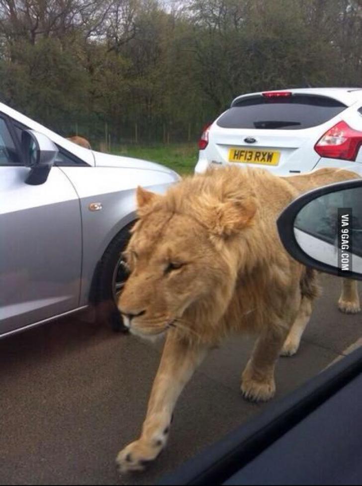 Incredibil! Au surprins imaginea asta în timp ce staționau în trafic