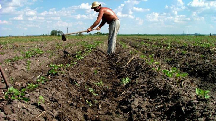 Meteorologii avertizează: Situația terenurilor agricole se va înrăutăți și mai mult