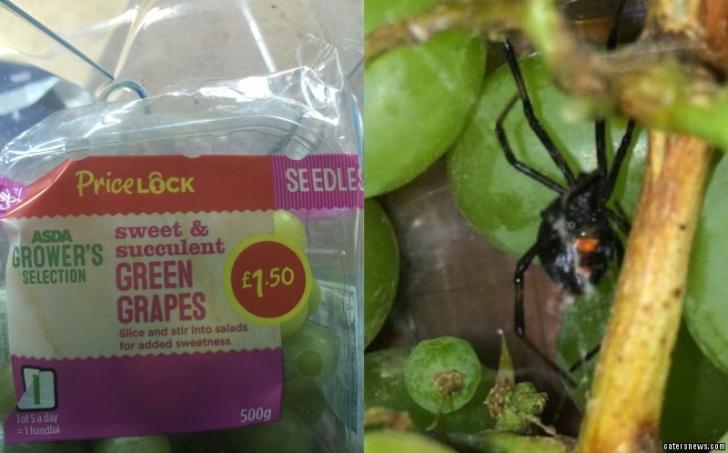 Au găsit un păianjen Văduva Negră într-o pungă cu struguri. Cum a fost posibil aşa ceva