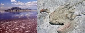 <p>Lacul morții, Natron Lake</p>