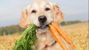 Faceţi cunoştinţă cu Sami, câinele vegetarian. Nu ţine vreo dietă, aşa s-a născut