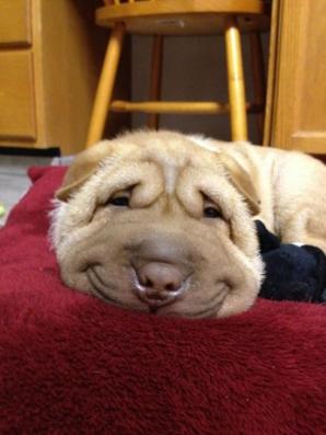 GALERIE FOTO. Cei mai fericiţi câini din lume. Au un zâmbet de milioane