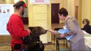 VIDEO. Doar în Rusia se poate aşa ceva! Un bărbat a venit cu un urs la secția de votare