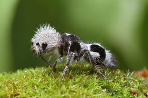Pare o insectă foarte drăguţă! Ce se întâmplă dacă te muşcă