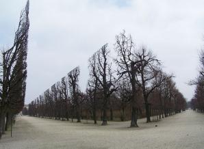 Fotografii uluitoare care par trucate, dar sunt cât se poate de reale! - Pomi în Grădina Schonbrunn