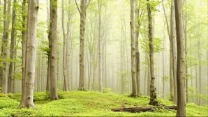 Inedit. Capsulele care transformă morţii în copaci şi cimitirele în păduri