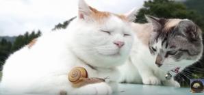Adorabil! Cum reacţionează două pisici când dau nas în nas cu un melc curios