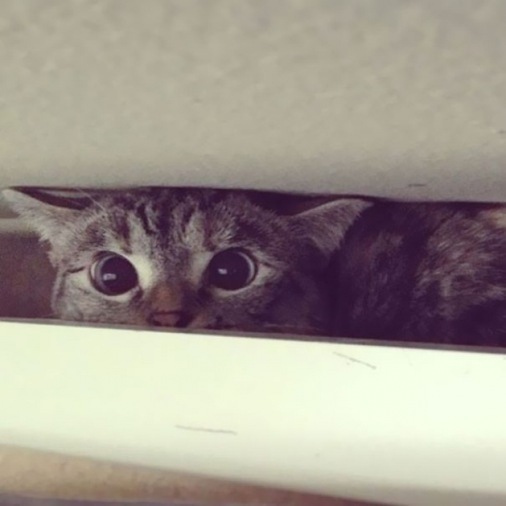 """Ea este Lana, cea mai populară pisică de pe Instagram. Câte persoane o """"urmăresc"""""""
