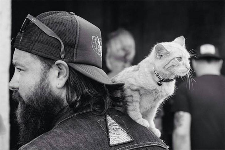 Un motociclist a găsit o pisică mică într-o benzinărie. Nu o să îţi vină să ce a urmat
