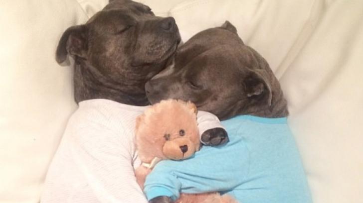Sunt absolut adorabili. Imaginile cu doi câini amuzanți fac înconjurul Internetului