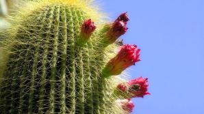 Testul cactusului. Vei afla un lucru uimitor despre tine! Tu ce cactus alegi?