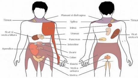 splina a crescut durerea articulară saltul durerii articulare