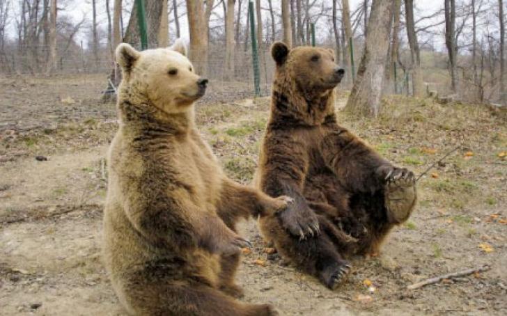 Un catelus da nas in nas cu doi ursi. Ceea ce urmeaza te va uimi. Totul a fost filmat
