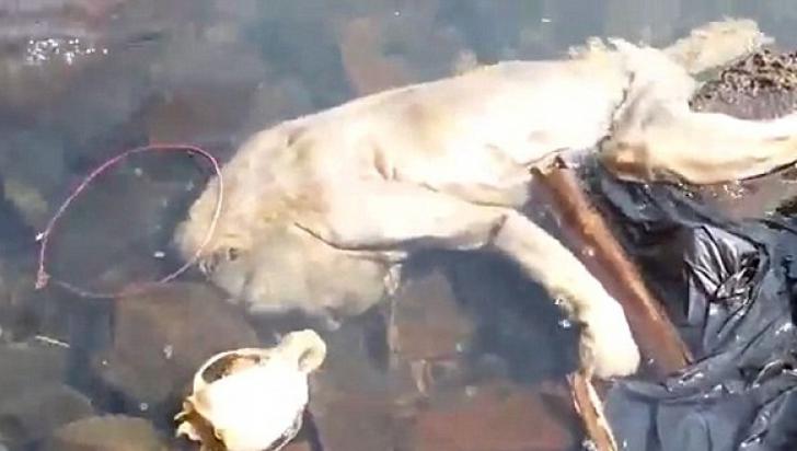 """O creatură misterioasă, găsită în apele unui râu. Are """"mâini mici şi picioare"""""""