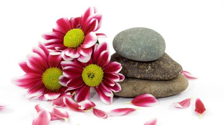 Feng-Shui: ce flori să ţii în casă ca să ai noroc în dragoste şi carieră