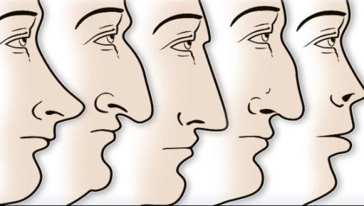 Ce spune forma nasului despre personalitatea ta