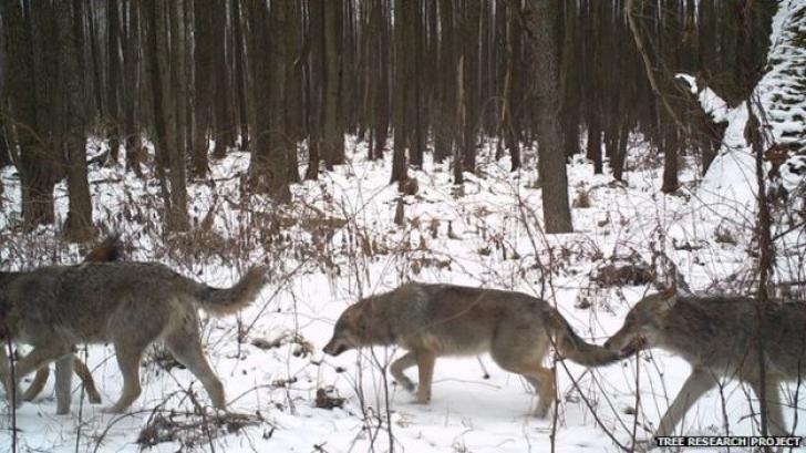 <p>GALERIE FOTO. Animalele de la Cernobîl. Zona de protectie arata ca o adevarata gradina zoologica</p>