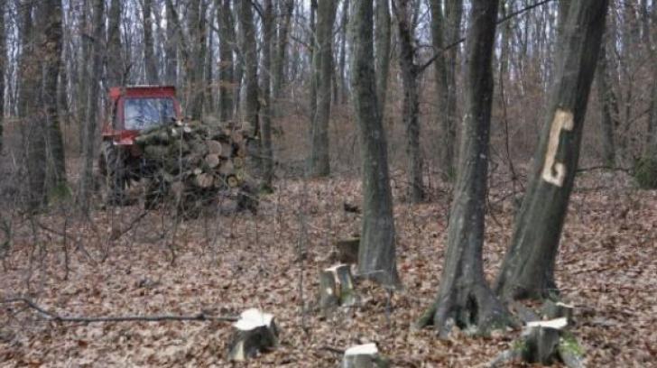 România, țara pădurilor furate: 231 milioane de lei, prejudiciu în 2013-2014
