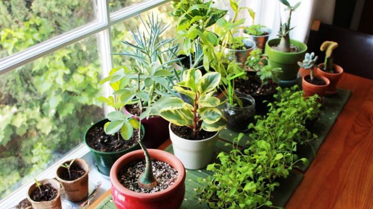 6 plante pe care să le ai în dormitor că să fii sănătos