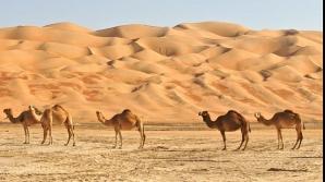 Desertul primește nisip românesc