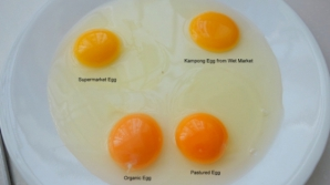 Cum faci diferenţa între ouăle de ţară şi cele din supermarket. Aşa arată un ou sănătos