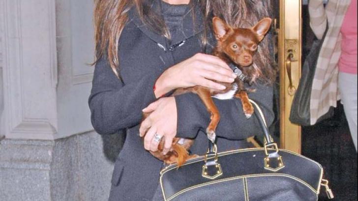 Incredibil! O mare actriță își duce câinele la acupunctură. Tratamentul lui o costă 5.720 $ pe lună