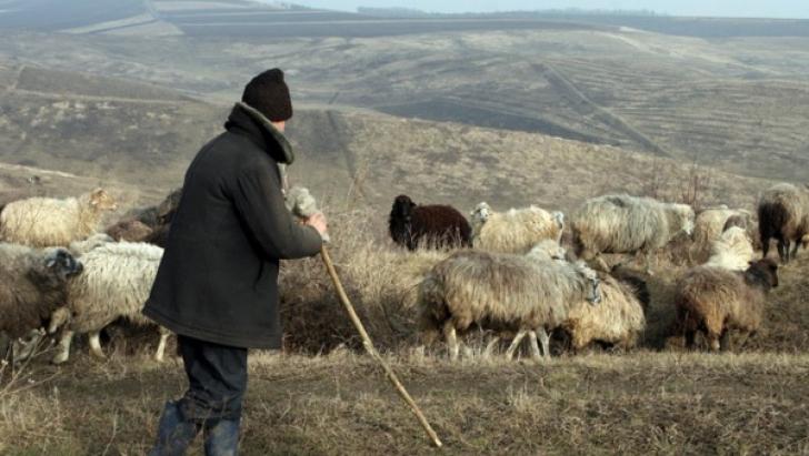 O femeie i-a propus unui cioban din Timiş o partidă de sex. Ce a urmat depăşeşte orice imaginaţie