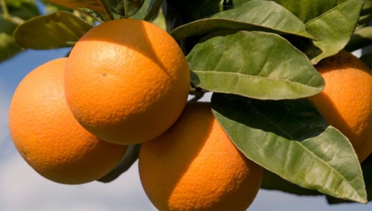 Efect uimitor al portocalelor. Ce se întâmplă dacă mănânci un astfel de fruct în fiecare zi