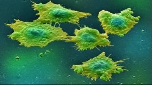 Mafia farmaceutică. De ce ne este ascuns faptul că acest remediu tratează cancerul?