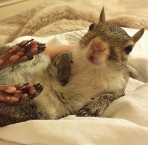 Cea mai adorabilă veveriţă de pe internet