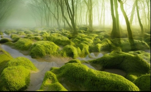Padurea Baciu din Cluj
