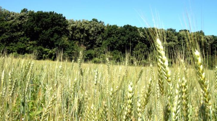 Care sunt prioritățile Ministerului Agriculturii