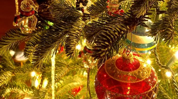 Tradiţii unice de Crăciun. Bradul brazilor: Cum să alegi un brad fără să superi pădurea